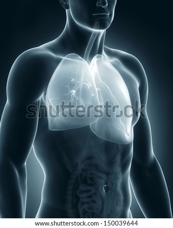 Male respiratory system anatomy - stock photo