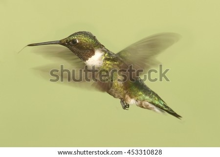 Male Ruby-throated Hummingbird (archilochus colubris) in flight colorful background - stock photo