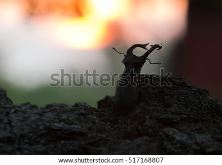 Male stag beetle, Lucanus cervus on wood