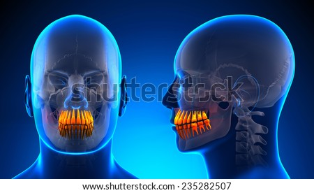 Male Teeth Dental Anatomy - blue concept