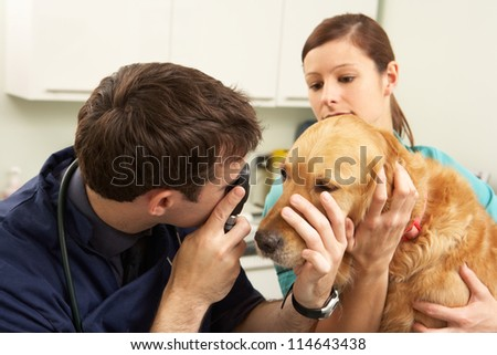 Male Veterinary Surgeon Examining Dog In Surgery - stock photo
