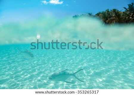 Maledives, underwater life, fishes swimming in the water a front of a island and blue sky