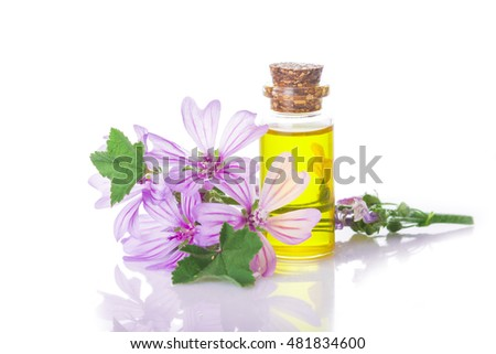 Mallow extract or essential oil in a little jar with malva flowers isolated on a white background