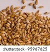 malt, macro - stock photo