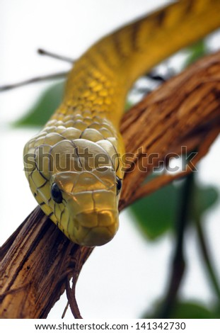 Mamba snake - stock photo