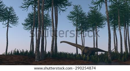 mamenchisaurus walking in araucaria grove - stock photo