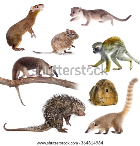 Mammals of South America isolated on white background
