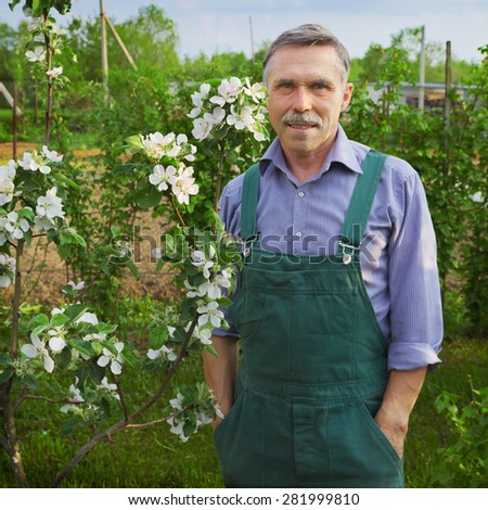 Man advanced in years and the flowering apple trees - stock photo