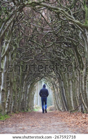 Man alone walking in a tunnel of trees on a foggy, spring morning. - stock photo