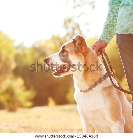 Man and central Asian shepherd walk in the park. He keeps the dog on the leash.