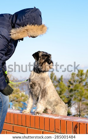 Man and his schnauzer dog outdoors in winter with the dog standing up on a brick wall against a snowy landscape - stock photo