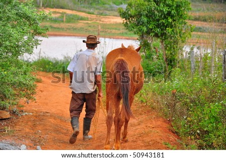 Man and horse in the Cuban tobacco countryside - stock photo