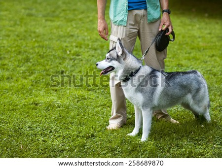 Man and Husky dog walk in the park.  - stock photo