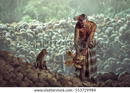 Man and Monkey working in harvesting of coconuts