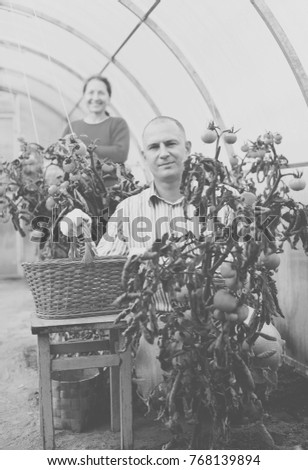 Man and woman in tomato plant  at hothouse