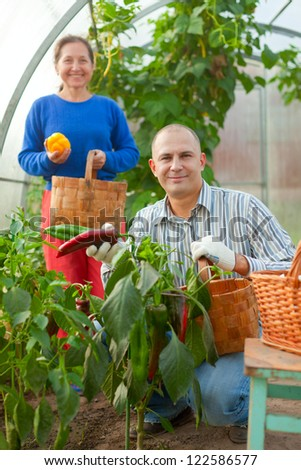Man and woman in vegetable plant  at hothouse