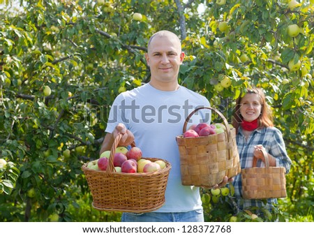 Man and woman picks apples in the orchard - stock photo