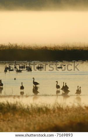 Man birds seek refuge in wildlife refuges such as this wetland. - stock photo