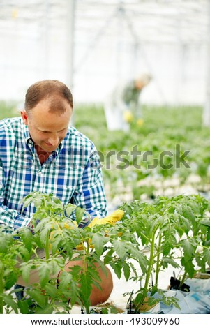 Man caring for plants in greenhouse