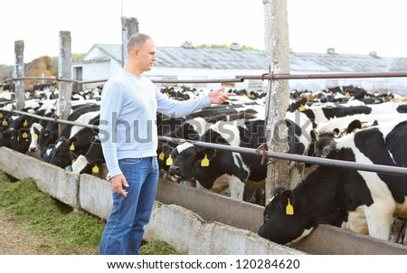 man counts the cows on the farm - stock photo