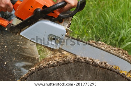 Man cuts a fallen tree.