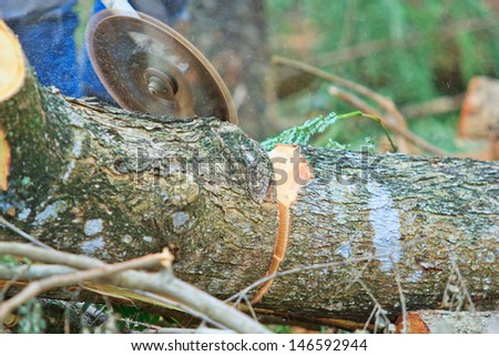 Man cutting piece of wood Cutting wood - stock photo