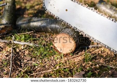 Man cutting piece of wood with chainsaw - stock photo
