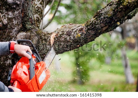 man cutting trees using an electrical chainsaw and professional tools - stock photo