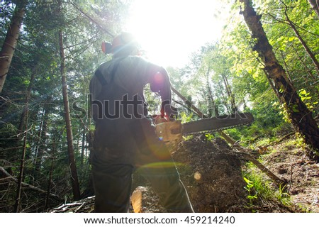 Man cutting trees with a chainsaw in the forest.