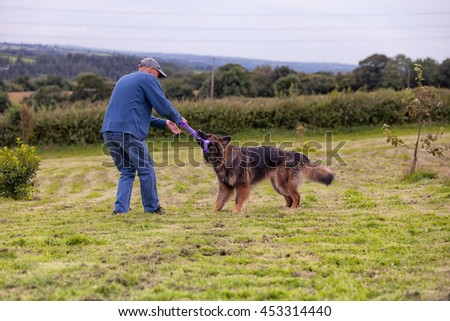 Man doing positive dog training with a German Shepherd Dog using a toy for a reward.