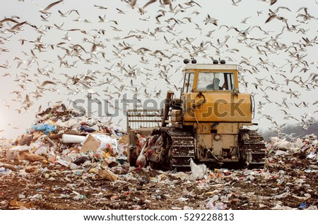 Man driving a garbage truck on a landfill, seagulls flying
