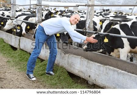 man feeding cows on a farm outdoors - stock photo
