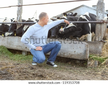 man feeding cows on a farm outdoors