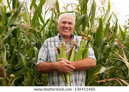 man gathering corn on field - stock photo