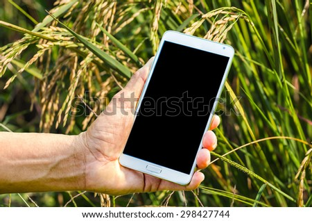 Man hand holding smartphone against on nature of rice farm background soft focus. - stock photo