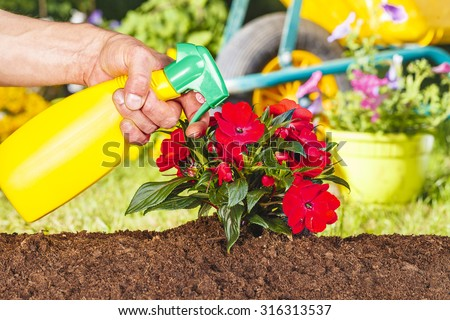 Man hand spraying red flowers in the garden