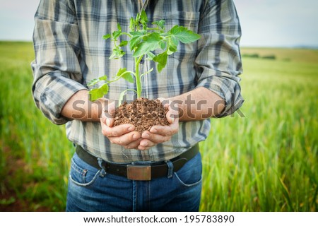 Man hands holding a green young plant. Symbol of spring and ecology concept  - stock photo