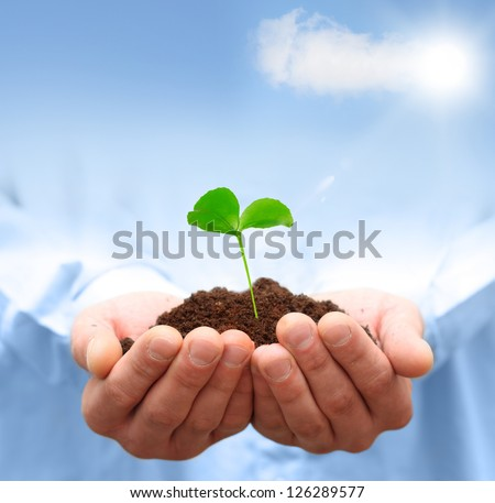 Man hands holding green plant. Ecology concept