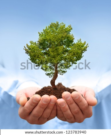 Man hands holding green tree. Ecology concept - stock photo