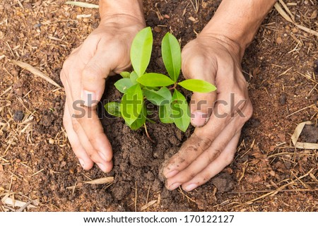 Man hands planting a small plant concept of ecology