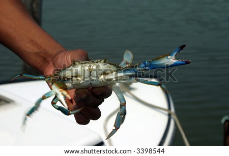 Man holding a Blue Crab in Motion with blurred moving claws