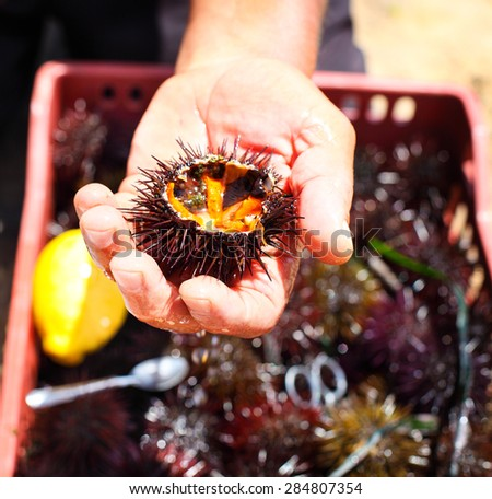 Man holding a sea urchin with lemon for eating it on the beach - stock photo