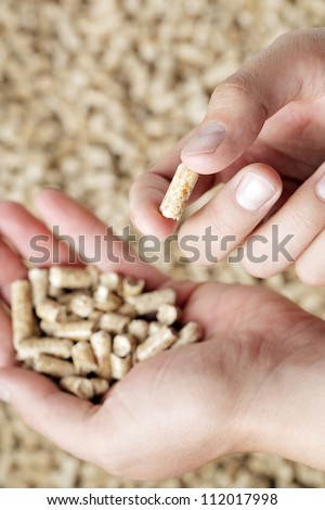 Man holding a wood pellet between his fingers. Wood pellets are made from wood waste and used as renewable fuel. - stock photo