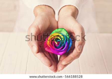 Man holding hands like heart with rainbow rose inside. Valentine's postcard. Women's day. St. Valetine's day.