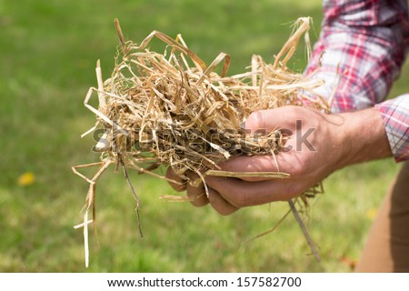 Man holding some straw with grass in background close up