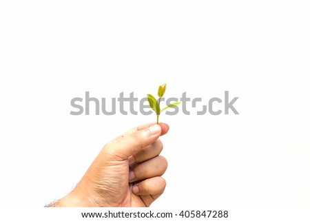 Man holding young plant in hands. Environmental protection concept.