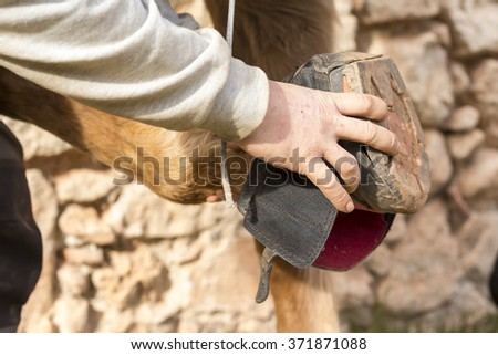 Man holds a cloth hoof of horse leg. Foreground