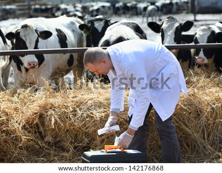 man in a white coat on a cows farm - stock photo