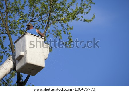 Man in bucket truck saws tree for tree removal or trimming - stock photo