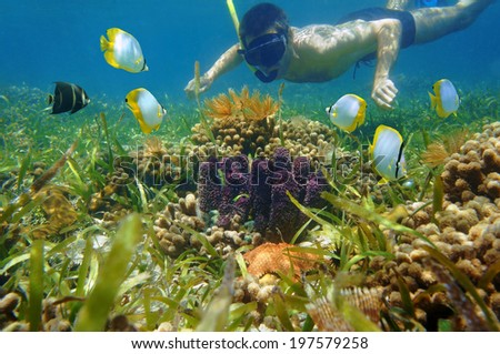 Man in snorkel underwater looking colorful sea life and tropical fish in a coral reef - stock photo